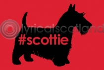 #scottie (HA6)