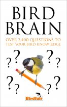 Bird Brain Quiz Book (Sep)