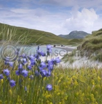 Harebells on the Beach, Vatersay (Art)