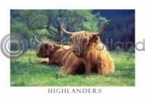 Highlanders in Glen Nevis (HA6)
