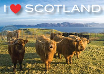 I Love Scotland - Highland Cows Magnet (H)
