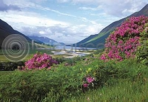 Loch Etive & Rhododendrons (HA6)