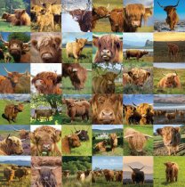 Highland Cows Composite Colour Photo Greetings Card