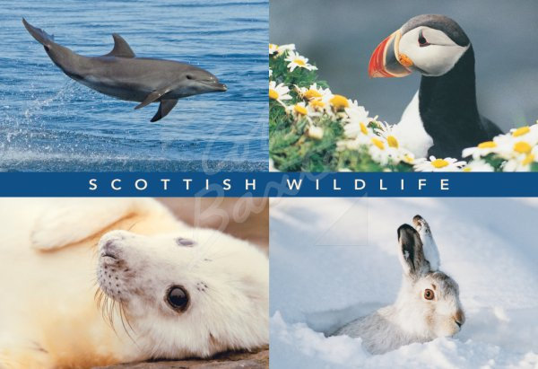 Dolphin, Puffin, Seal, Hare Comp Postcard (H Std CB)