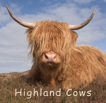 Highland Cow - Gift Book