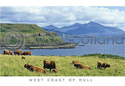 Highland Cattle & Ben More Range (HA6)