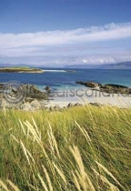 Dune Grass At Iona's North Postcard (VA6)