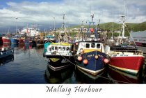 Mallaig Harbour Postcard (HA6)