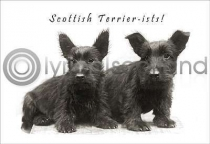 Scottish Terrierists (HA6)