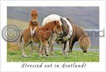 Stressed Out In Scotland (HA6)