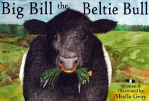 Big Bill the Beltie Bull