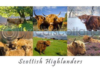 Scottish Highlanders Composite (HA6)
